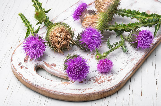 milk thistle on a rustic wooden cutting board